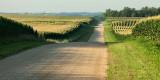 Irish Hollow Road