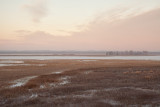 Illinois River Floodplain in January