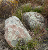 Field Boulders with Lichen