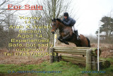 horse_sale