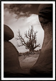 Ghost Tree at the Devils Garden