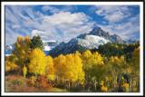 Golden Aspen and Mt. Sneffels