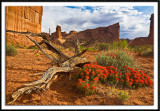 Indian Paintbrush At Arches NP