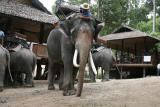 Elephant Rider looking for Lice3477.jpg