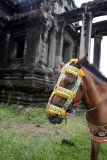 Horse with Elaborate Halter 493.jpg