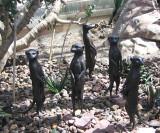 5 meerkats, bronze