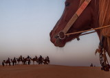 Douz  gateway to the Sahara