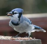 birds_on_the_deck