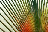 colorful palm