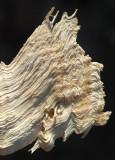 Wood Chip.jpg