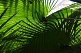 Palm Fronds 209.jpg