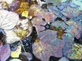 Leaves Floating