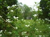 Flowers N Barn