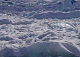 snow-petrel-III.jpg