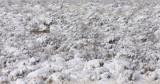 mule-deer-snow.jpg