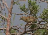Botteris Sparrow