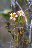 Pugu-Hills-Orchid.jpg