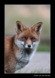 1362 fox