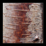 3320 birch / berk