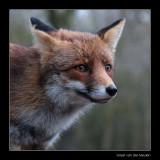 2189 fox