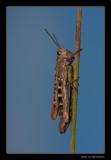 5822 grasshopper
