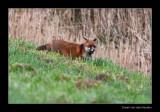 2965 fox