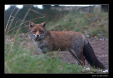 5284 fox