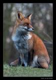 7641 fox