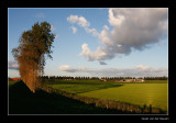 8918 long shadows in Dutch landscape