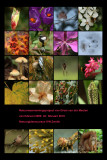 poster project for natures guide course 2009