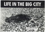 Life In The Big City Actual Death Scene Photo