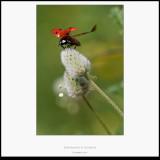 Escarabajos - Macro foto