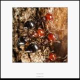 Hormigas - Macro foto