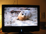 From a TV show on saving seals