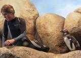 A curious penguin