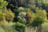 Near the tufa cave paths.