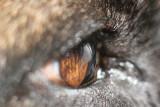 yuri's eye