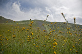 Kern County Wildflowers 2009