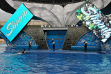 VS08 (091) Seaworld