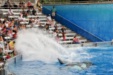 VS08 (101) Seaworld