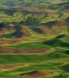 Palouse   (wheat fields)
