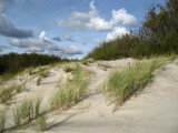 Grass on the sandy slope