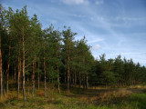 At the treeline