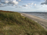Windblown grass and the empty strand
