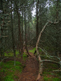 Path through an eerie forest