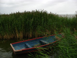 Tied up boat amongst the reeds