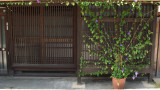 Neatly arranged ivy at a machiya entrance