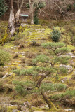 Sculpted tree and path leading to miniature shrine