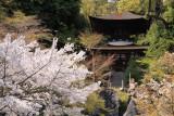 Sakura and Tahō-tō