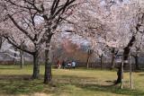 Hanami picnic across the Nishino-maru
